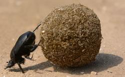 Sisyphus. Image credit: Topi_Pigula.