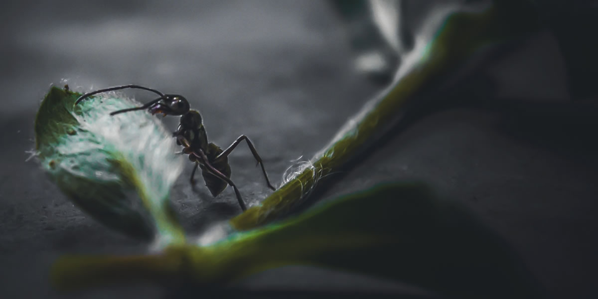 Ant. Image credit: biswajitmajumder150.