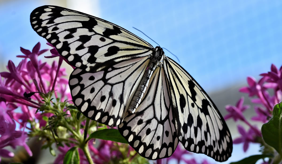 Changi airport butterfly garden. Image credit: Capri23auto.