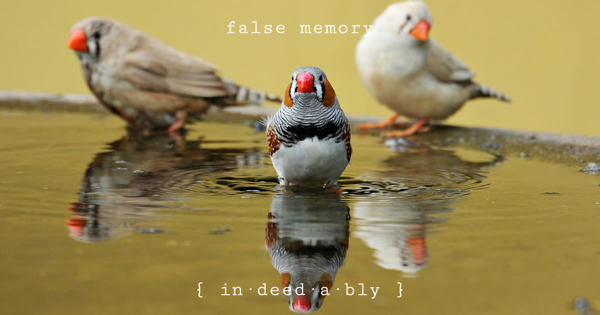 False memory. Image credit: PXhere.
