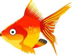 Gold fish. Image credit: OpenClipart-Vectors.