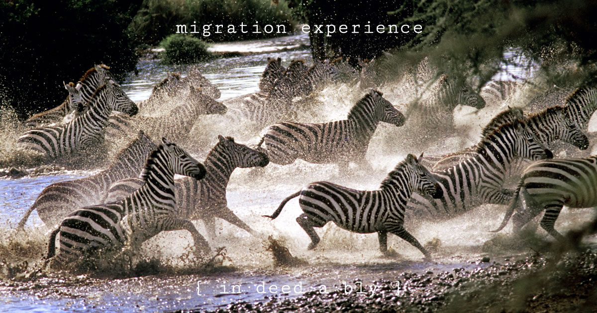 Migration experience. Image credit: Jan Fleischmann.